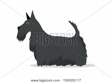 Scottish Terrier, Aberdeen Terrier, Scottie breed of dog isolated on white. Skye Terrier. Small, compact, short-legged, sturdily-built. Series of puppies icon symbol. Vector illustration