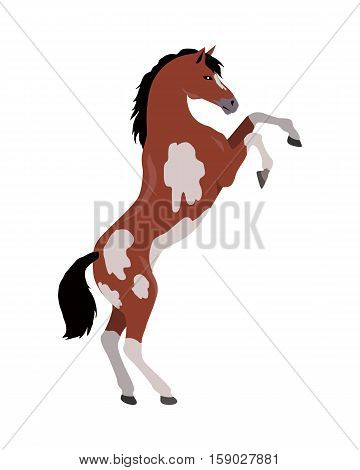Rearing pinto horse with hind legs vector. Flat design. Domestic animal. Country inhabitants concept. For farming, animal husbandry, horse sport illustrating. Agricultural species. Isolated on white