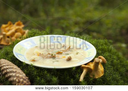 mushroom soup in white plate on moss