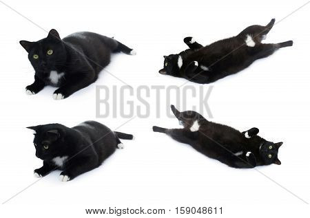 Lying on the floor black cat isolated over the white background