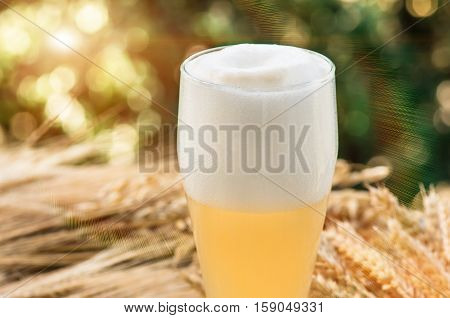 large glass of light unfiltered beer malt barley ears standing on an old wooden table dyeing natural background