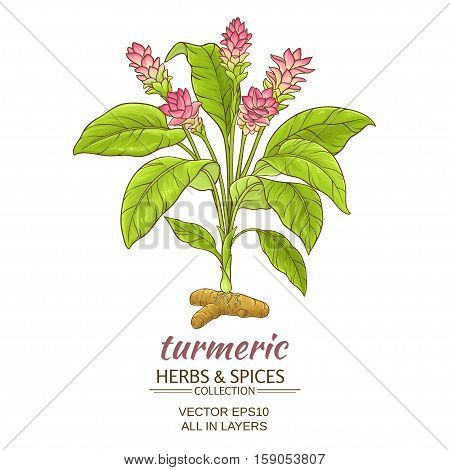 turmeric plant vector illustration on white background