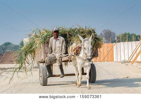 MANAMA, BAHRAIN-  NOVEMBER 18, 2016: A man with loaded grass in a donkey cart