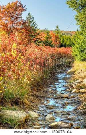 Dolly sods muddy wet trail path during autumn with red blueberry bushes in West Virginia