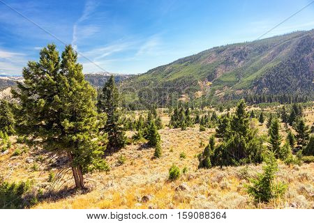 Hilly Yellowstone Landscape