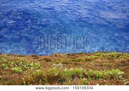 Looking over a flora covered clifftop to the sea below.