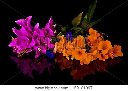 Beautiful, colorful, vibrant, flowers, pink, purple, yellow, black background,  with reflection