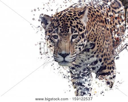 Digital Painting of Leopard Portrait