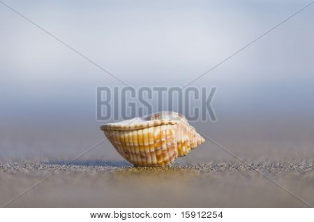 Small seashell upturned on the beach with nice bokeh poster