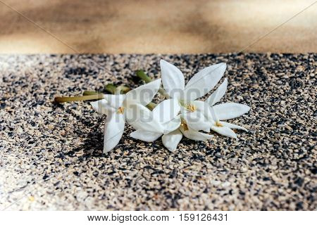 white flower blossom on yellow stone ground