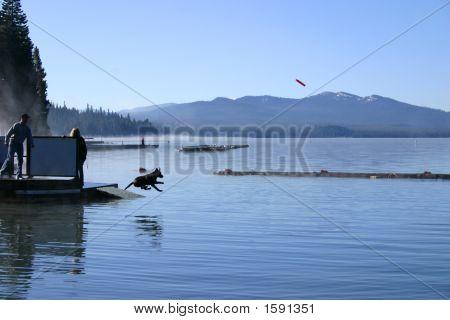 Dog Pier Diving, Diamond Lake