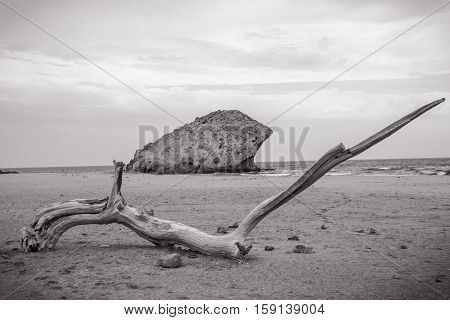 Dry branch in a deserted Spanish beach