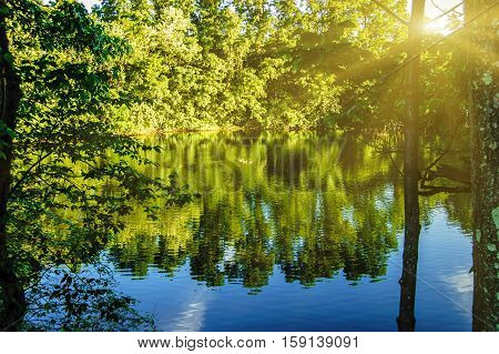 A peaceful forest scene with a quiet water lake pond surface with surrounding trees reflection.