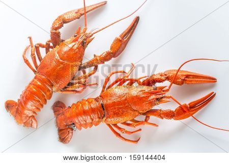 Boiled crayfish on the white background top view