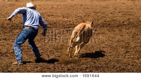 Solo Calf Roping.