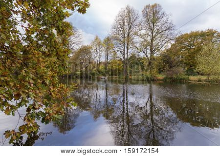 Autumn trees being reflected in the lake