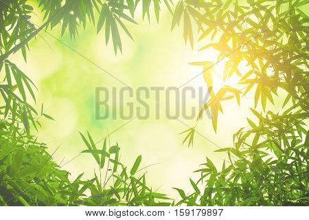 Green bamboo leaves or with background .Green Energy.Christmas spring summer