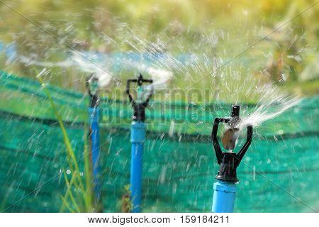 closeup of water sprinkler irrigation of agricultural field closeup of head water sprinkler
