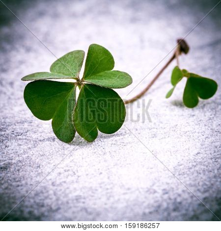 Clovers leaves on Stone .The symbolic of Four Leaf Clover the first is for faith the second is for hope the third is for love and the fourth is for lucky . Clover and shamrocks is symbolic dreams .