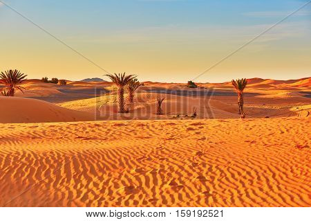 Palm Trees And Sand Dunes In The Sahara Desert, Morocco