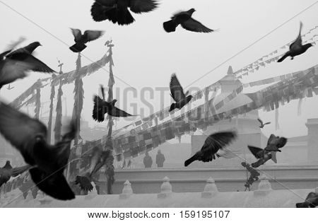 Pigeons fly during an early winter morning at the great stupa at Boudha Kathmandu Nepal.