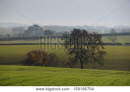 Late autumn landscape in Bedfordshire England UK.