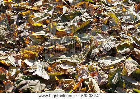 fall leaves cover on the ground abstract background