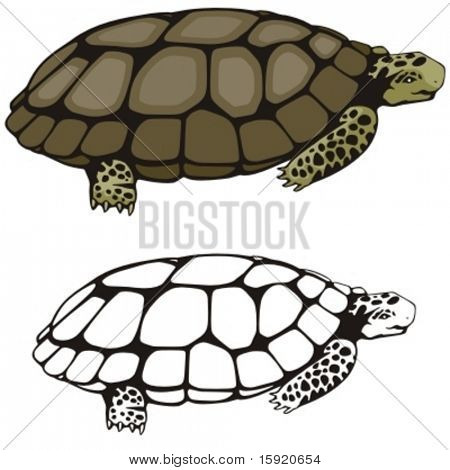 Vector illustration of a turtle.