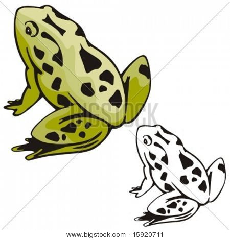 Vector illustration of a frog.