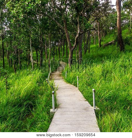 The Nature Trail in the forest of Thailand