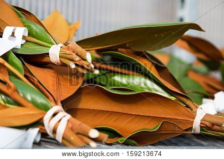 magnolia leaves in bundles waiting to be arranged into fresh natural Christmas floral arrangements