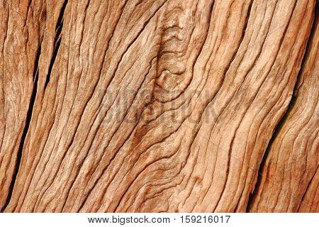 Close up beautiful wood texture background. Stock photo.