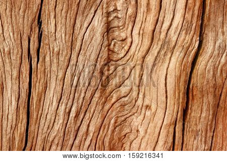 Close up natural wood texture background. Stock photo.
