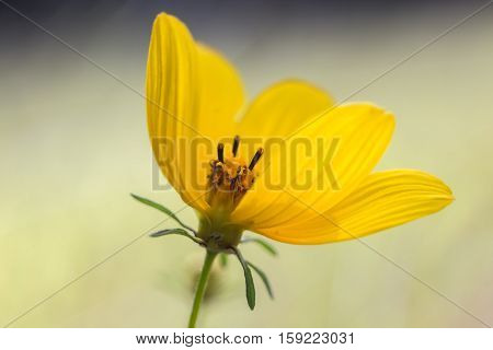 Yellow Petals With Center #1