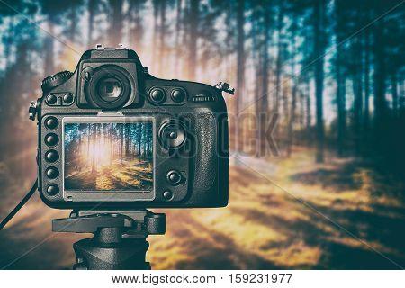 photography view camera photographer lens lense video forest tree photo digital glass blurred focus landscape photographic color concept sunset sunrise sun light - stock image