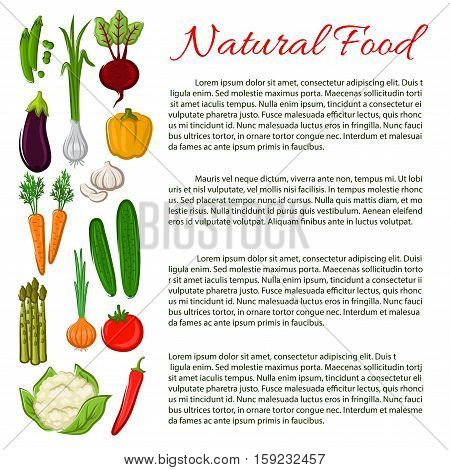 Veggies poster. Healthy vegetarian food nutrition information poster with vegetables radish, cabbage, garlic, corn, tomato, asparagus, corn, chili pepper, eggplant pea