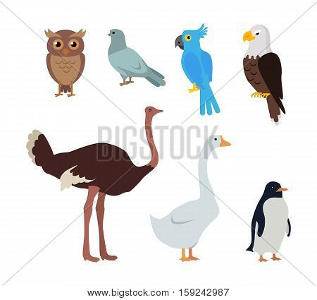 Set of birds isolated. Owl dove blue parrot eagle ostrich goose penguin. Collection of aves. Group of toothless beaked jaws birds, laying of hard-shelled eggs. Stickers for children. Vector