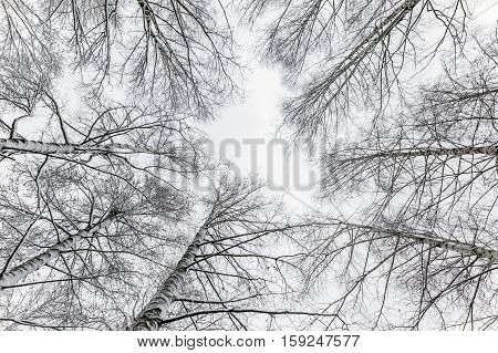 White winter landscape in the forest .