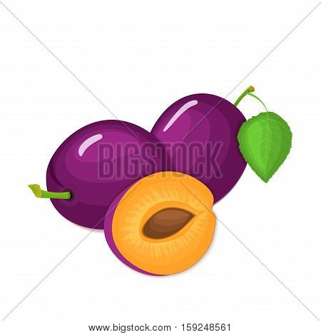 Composition of several plums. Purple vector plum fruits whole and slice appetizing looking. Group of tasty fruits colorful design for the packaging of juice, breakfast, healthy eating, vegetarianism
