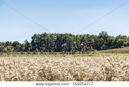 Saint-Quentin-FallavierFrance - July 16 2016: The leading part of the peloton including Team Sky protecting Froome in Yellow Jersey riding in a wheat plain during the stage 14 of Tour de France 2016.