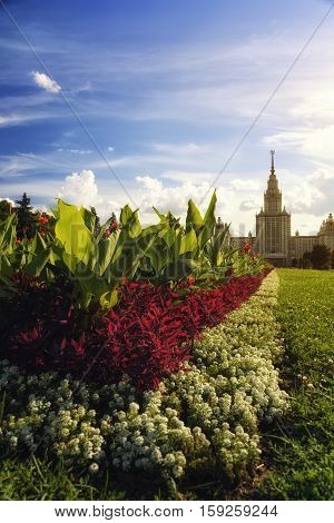 Flowers near Moscow State Univercity Russia summer 2016