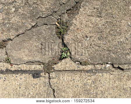 cracked concrete street with plant growing in the middle
