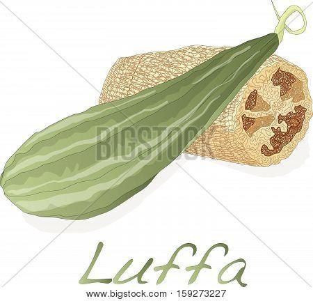 Luffa1 Copy