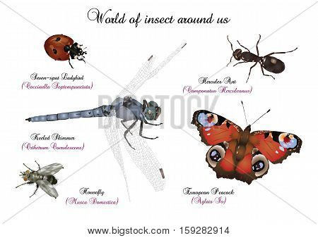 It is illustration of world of insect around us