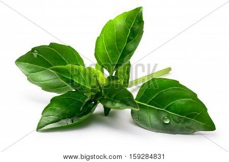 Fine Verde Basil, Clipping Paths