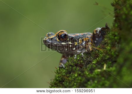 Tree frog, beautiful tree frog, little tree frog