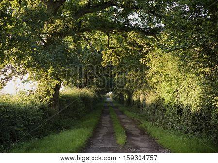 Trees Tranquil Scene Rural Road Solitude Concept