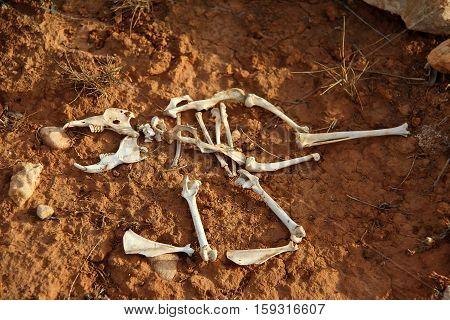 Skeleton / The skeleton of a small animal.