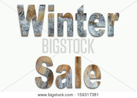 Winter Sale red fox fur in a font trained