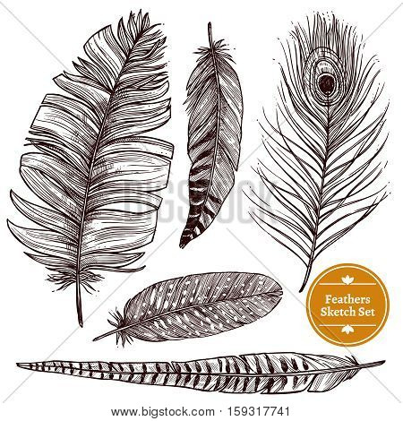 Hand drawn feathers set of different bird plumes on white background isolated vector illustration